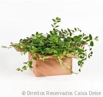 Caixa de Papelão para Mudança com Plantas